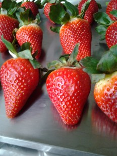 Big Juicy Strawberries